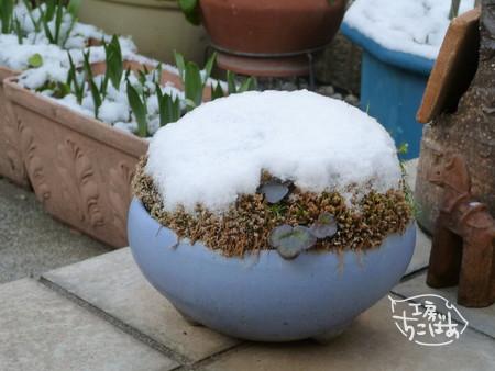 東京の初積雪記念にパチリ
