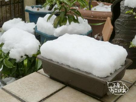 植木鉢に積もった春の雪